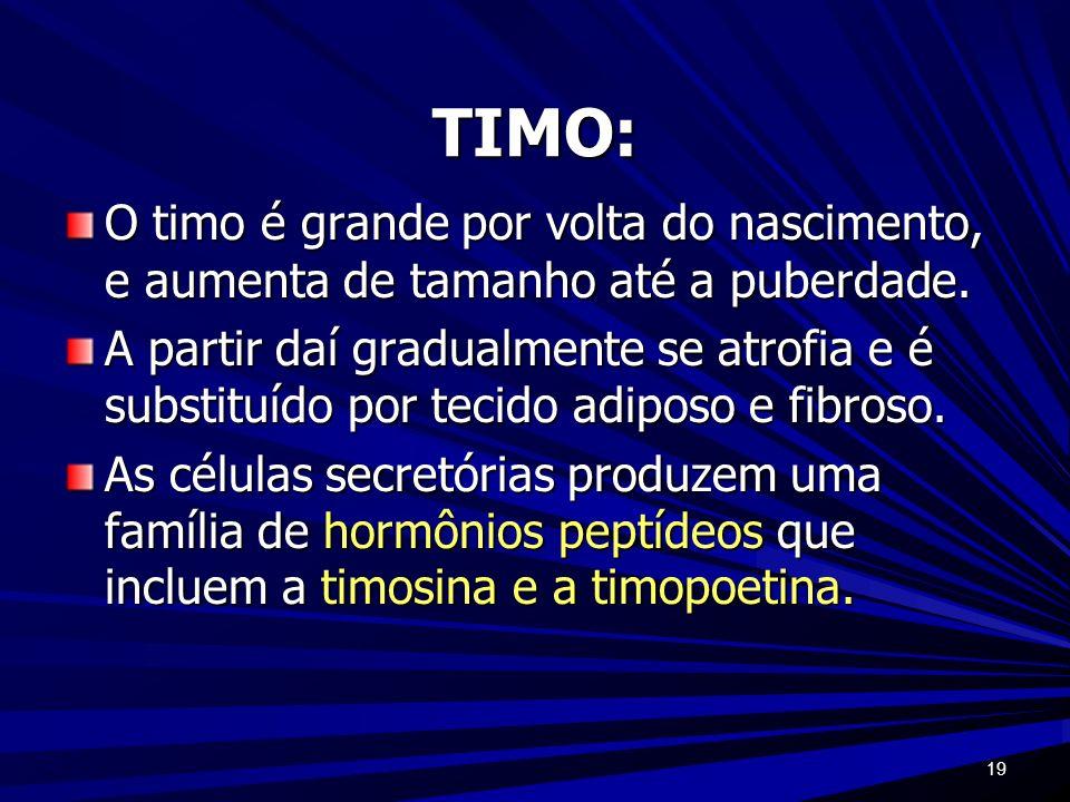 19 TIMO: O timo é grande por volta do nascimento, e aumenta de tamanho até a puberdade. A partir daí gradualmente se atrofia e é substituído por tecid