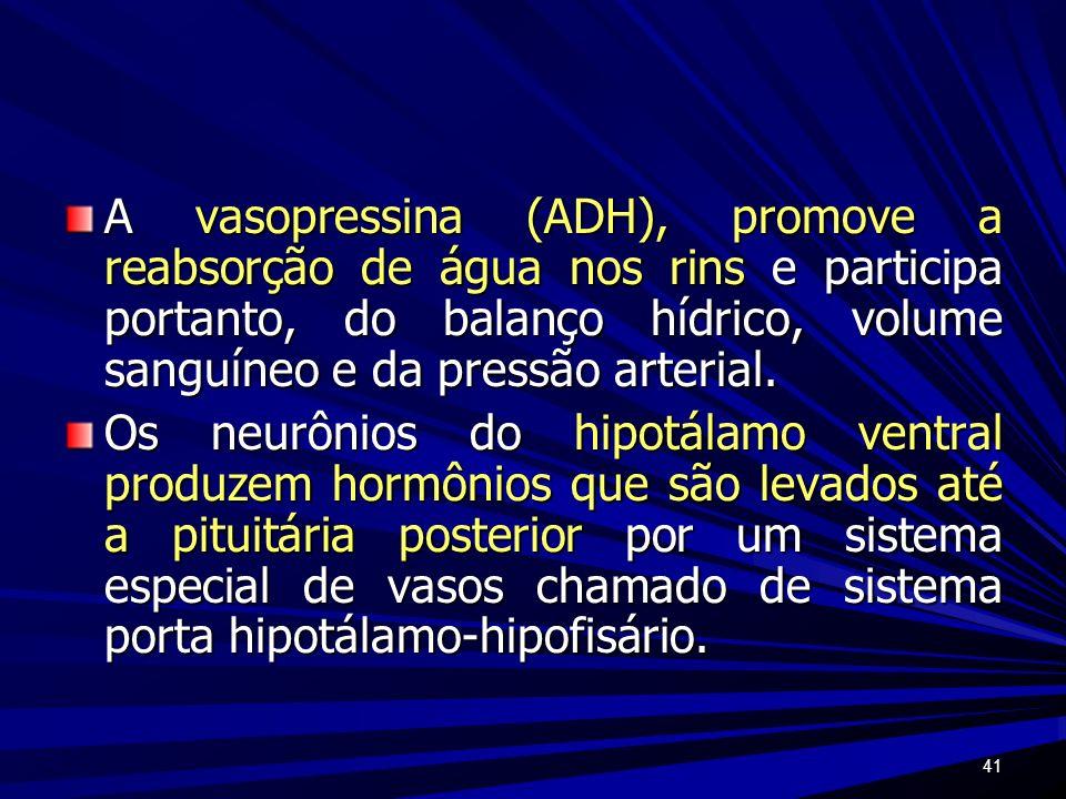 41 A vasopressina (ADH), promove a reabsorção de água nos rins e participa portanto, do balanço hídrico, volume sanguíneo e da pressão arterial. Os ne