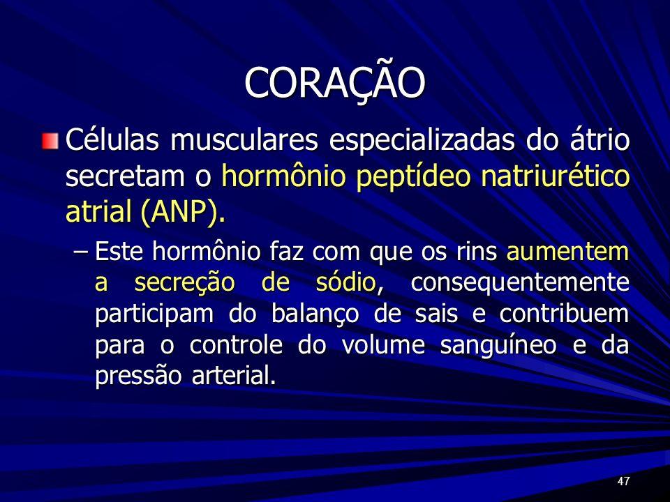 47 CORAÇÃO Células musculares especializadas do átrio secretam o hormônio peptídeo natriurético atrial (ANP). –Este hormônio faz com que os rins aumen