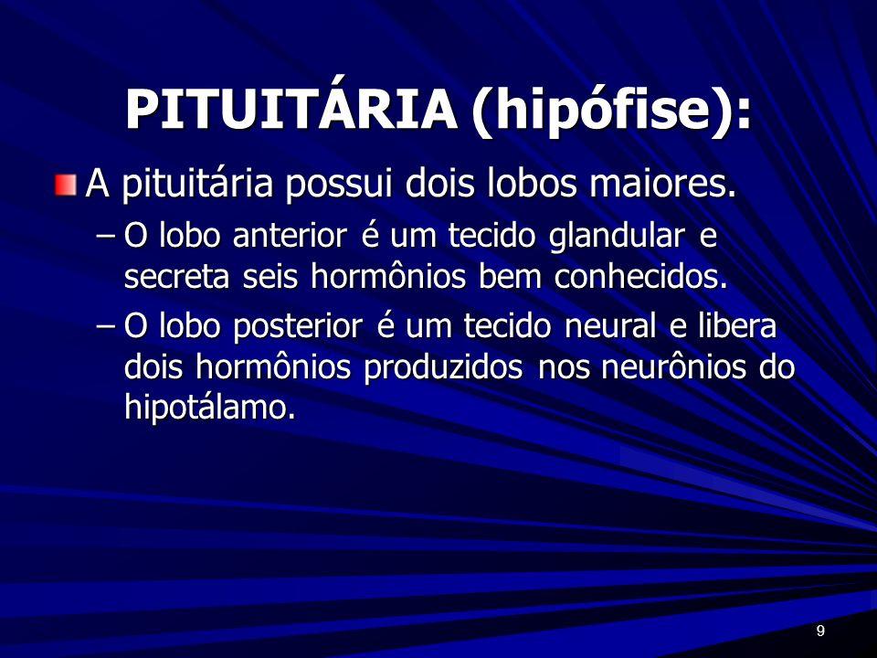 9 PITUITÁRIA (hipófise): A pituitária possui dois lobos maiores. –O lobo anterior é um tecido glandular e secreta seis hormônios bem conhecidos. –O lo
