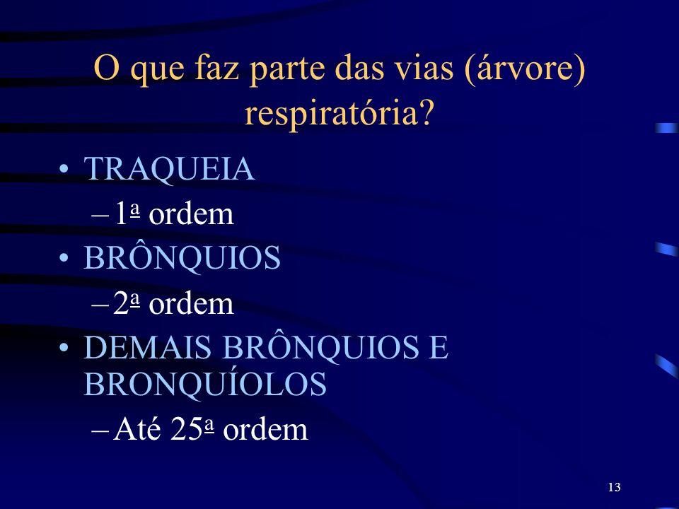 13 O que faz parte das vias (árvore) respiratória? TRAQUEIA –1 a ordem BRÔNQUIOS –2 a ordem DEMAIS BRÔNQUIOS E BRONQUÍOLOS –Até 25 a ordem