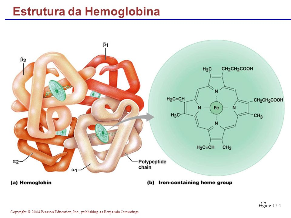 Copyright © 2004 Pearson Education, Inc., publishing as Benjamin Cummings 17 Estrutura da Hemoglobina Figure 17.4