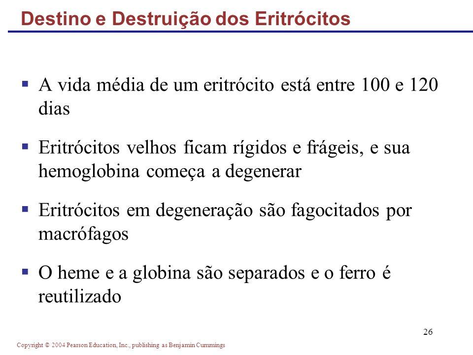 Copyright © 2004 Pearson Education, Inc., publishing as Benjamin Cummings 26 Destino e Destruição dos Eritrócitos A vida média de um eritrócito está e