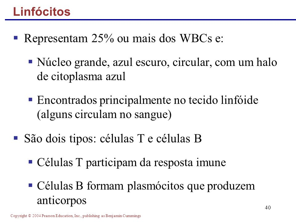 Copyright © 2004 Pearson Education, Inc., publishing as Benjamin Cummings 40 Representam 25% ou mais dos WBCs e: Núcleo grande, azul escuro, circular,