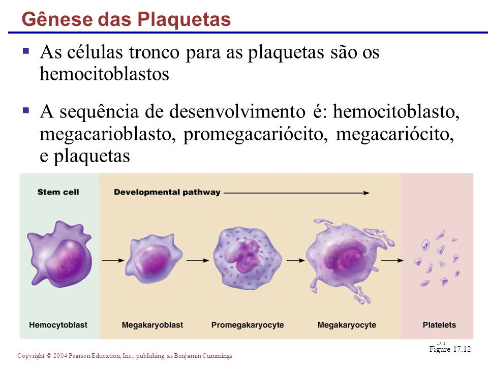 Copyright © 2004 Pearson Education, Inc., publishing as Benjamin Cummings 51 Gênese das Plaquetas As células tronco para as plaquetas são os hemocitob