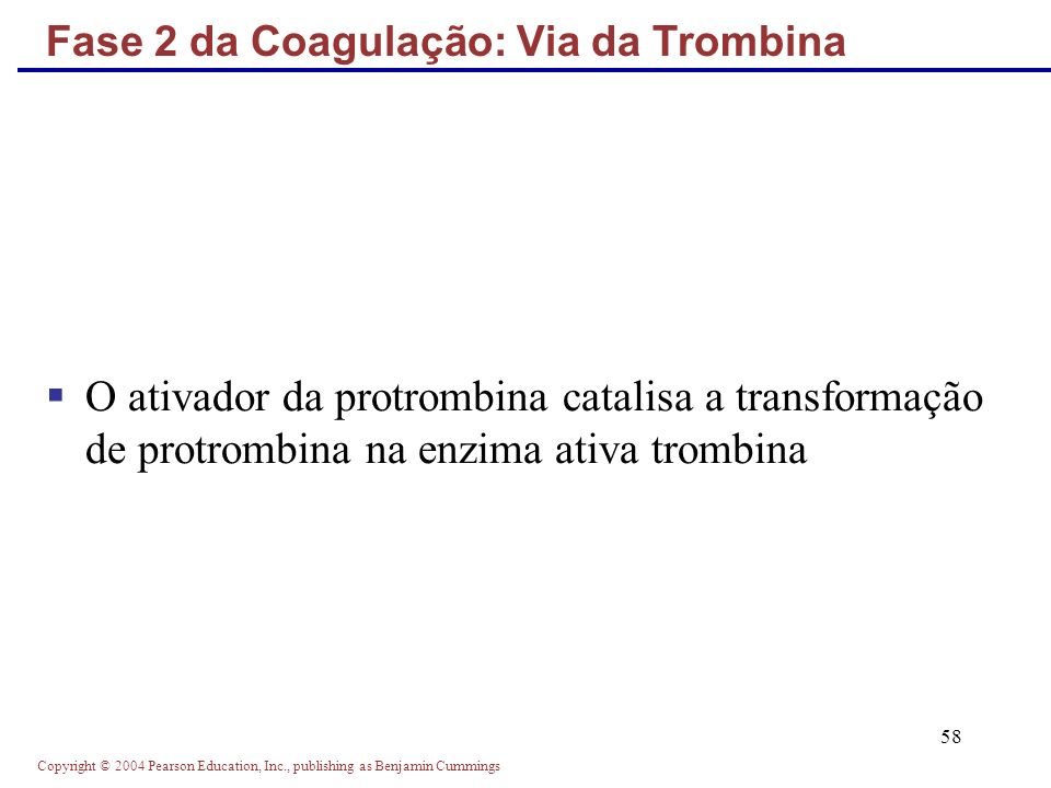 Copyright © 2004 Pearson Education, Inc., publishing as Benjamin Cummings 58 O ativador da protrombina catalisa a transformação de protrombina na enzima ativa trombina Fase 2 da Coagulação: Via da Trombina