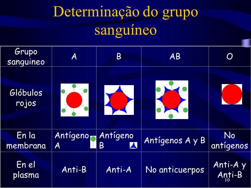 10 Determinação do grupo sanguíneo Grupo sanguineo ABABO Glóbulos rojos En la membrana Antígeno A Antígeno B Antígenos A y B No antígenos En el plasma