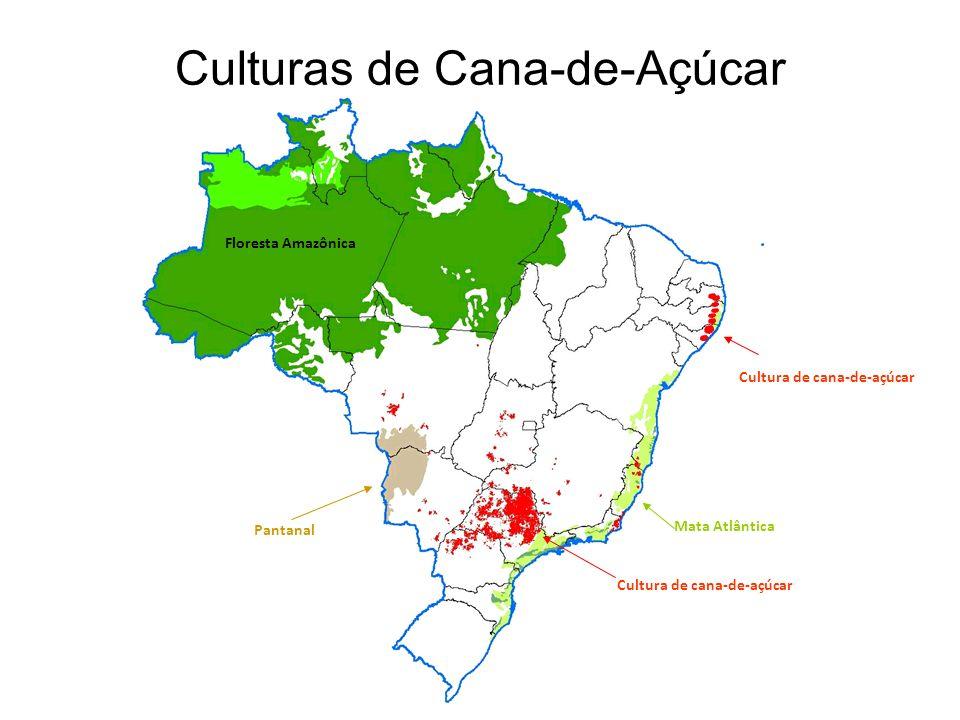 8 EFEITOS DO USO DO ETANOL NA QUALIDADE DO AR Concentração de poluentes na região metropolitana de São Paulo Chumbo: caiu de 1,4 ug/m 3 em 1977 a menos de 0,10 ug/m 3 em 1991.