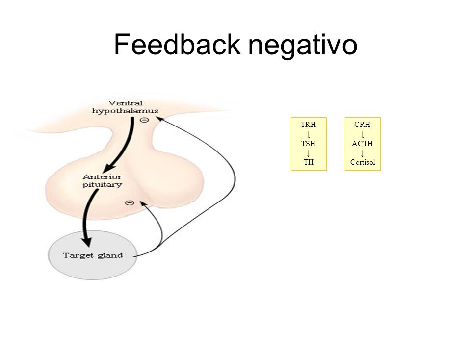 Feedback negativo TRH TSH TH CRH ACTH Cortisol