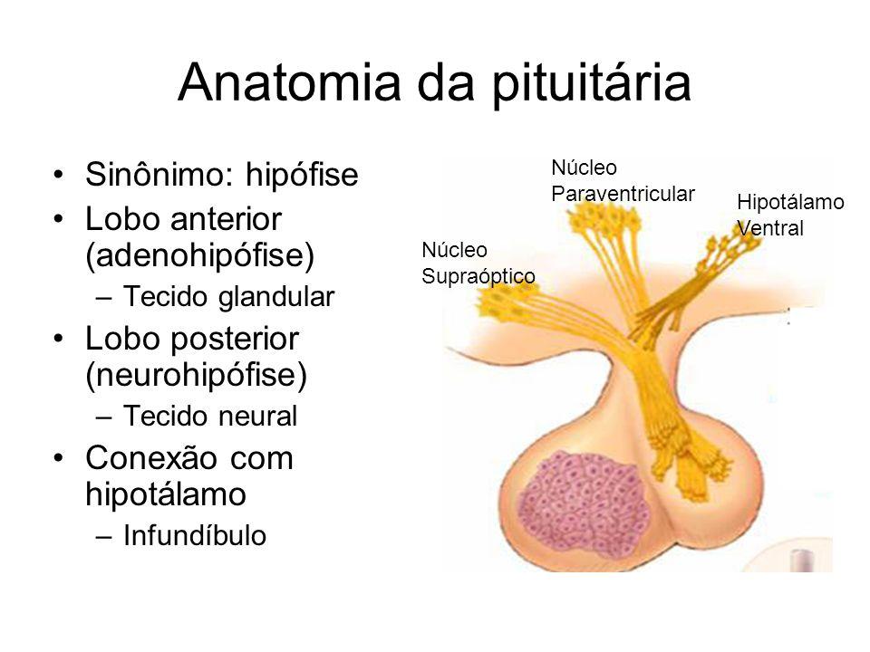 Anatomia da pituitária Sinônimo: hipófise Lobo anterior (adenohipófise) –Tecido glandular Lobo posterior (neurohipófise) –Tecido neural Conexão com hi