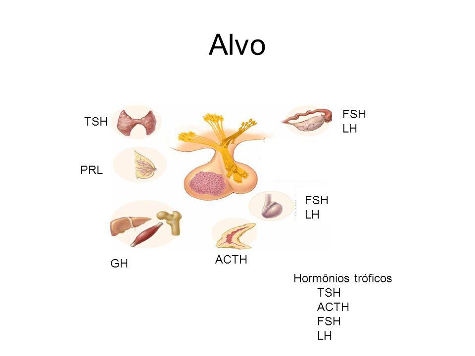 Alvo TSH PRL GH ACTH FSH LH FSH LH Hormônios tróficos TSH ACTH FSH LH