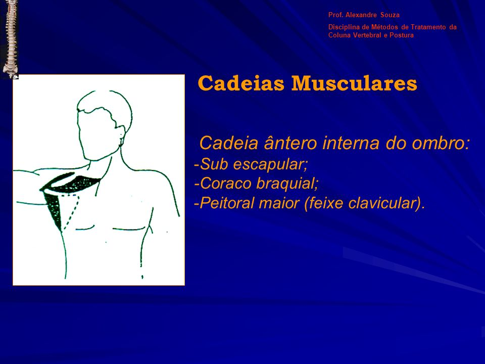 Cadeia ântero interna do ombro: -Sub escapular; -Coraco braquial; -Peitoral maior (feixe clavicular). Cadeias Musculares Prof. Alexandre Souza Discipl