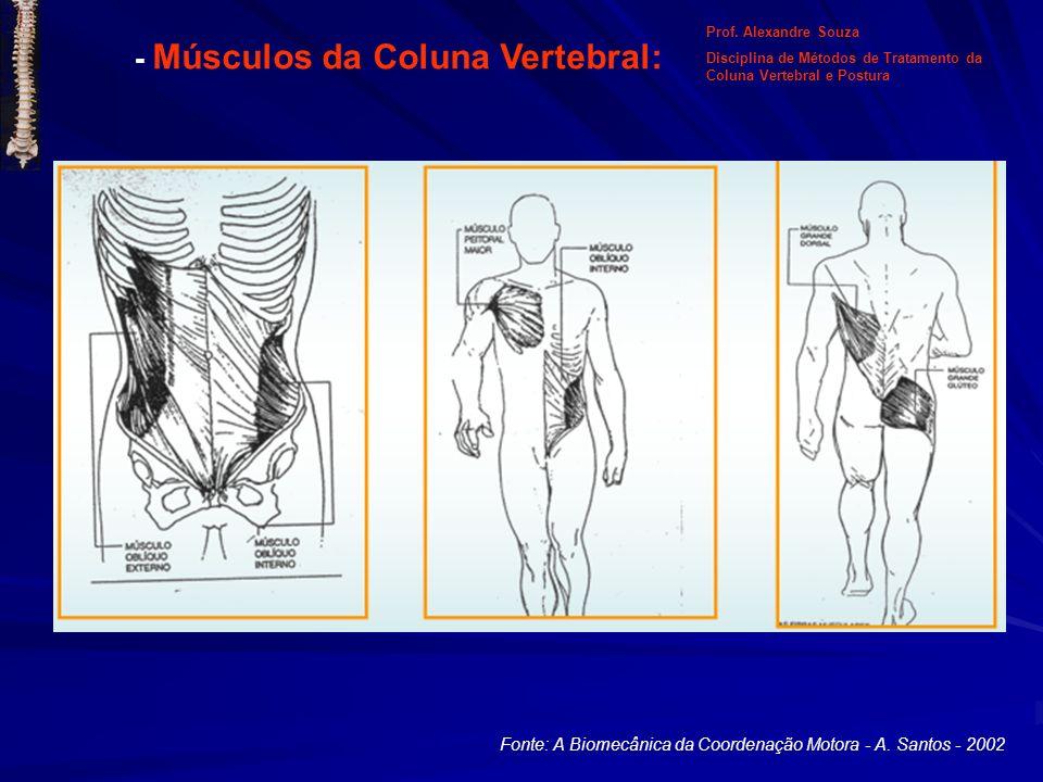 Fonte: A Biomecânica da Coordenação Motora - A. Santos - 2002 - Músculos da Coluna Vertebral: Prof. Alexandre Souza Disciplina de Métodos de Tratament