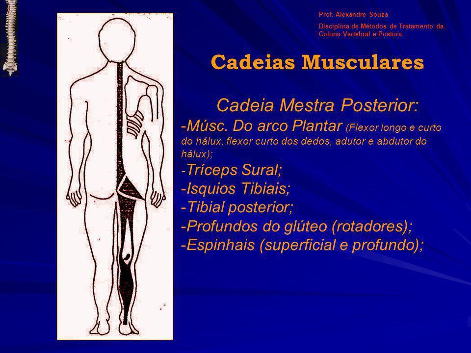 Cadeia Mestra Posterior: -Músc. Do arco Plantar (Flexor longo e curto do hálux, flexor curto dos dedos, adutor e abdutor do hálux); - Tríceps Sural; -