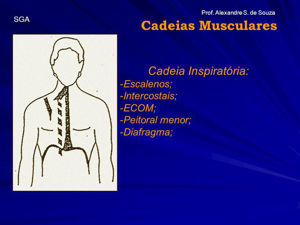 Prof. Alexandre S. de Souza SGA Cadeia Inspiratória: -Escalenos; -Intercostais; -ECOM; -Peitoral menor; -Diafragma; Cadeias Musculares