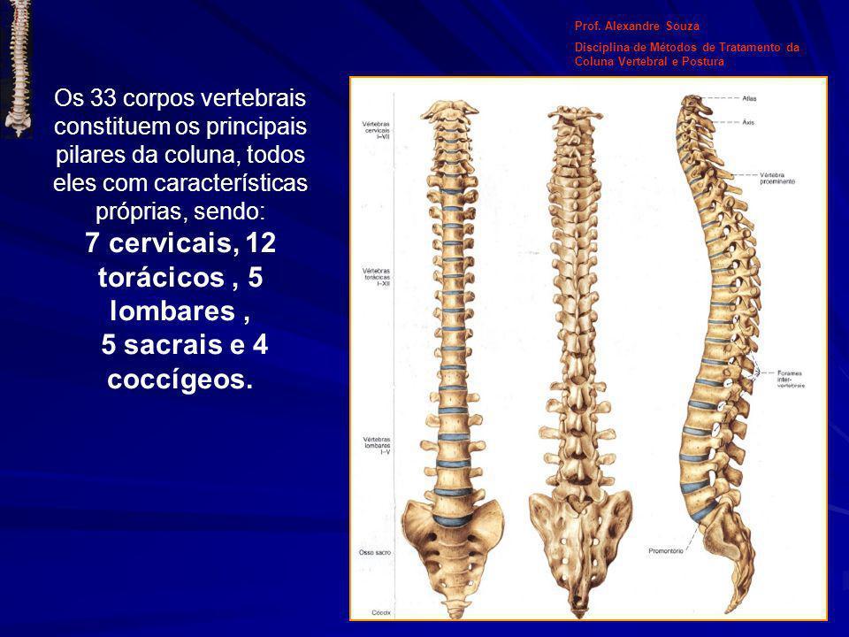 Os 33 corpos vertebrais constituem os principais pilares da coluna, todos eles com características próprias, sendo: 7 cervicais, 12 torácicos, 5 lomba