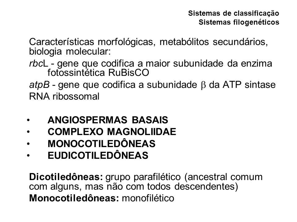 Características morfológicas, metabólitos secundários, biologia molecular: rbcL - gene que codifica a maior subunidade da enzima fotossintética RuBisCO atpB - gene que codifica a subunidade da ATP sintase RNA ribossomal ANGIOSPERMAS BASAIS COMPLEXO MAGNOLIIDAE MONOCOTILEDÔNEAS EUDICOTILEDÔNEAS Dicotiledôneas: grupo parafilético (ancestral comum com alguns, mas não com todos descendentes) Monocotiledôneas: monofilético