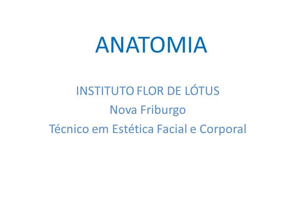 ANATOMIA INSTITUTO FLOR DE LÓTUS Nova Friburgo Técnico em Estética Facial e Corporal