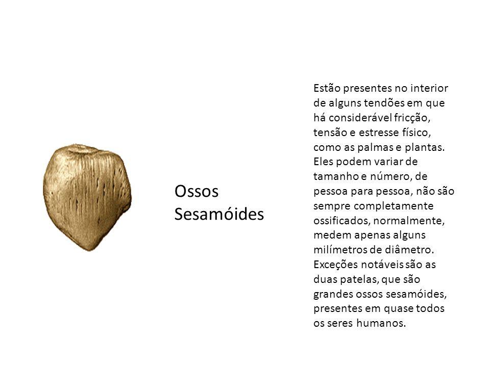 Ossos Sesamóides Estão presentes no interior de alguns tendões em que há considerável fricção, tensão e estresse físico, como as palmas e plantas. Ele