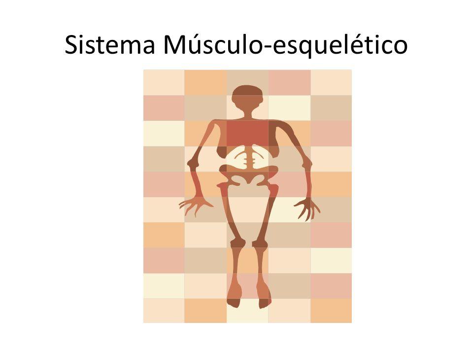 A sustentação do corpo está a cargo do sistema esquelético (esqueleto), que também fornece, em certos casos, proteção aos órgãos internos e ponto de apoio para a fixação dos músculos.