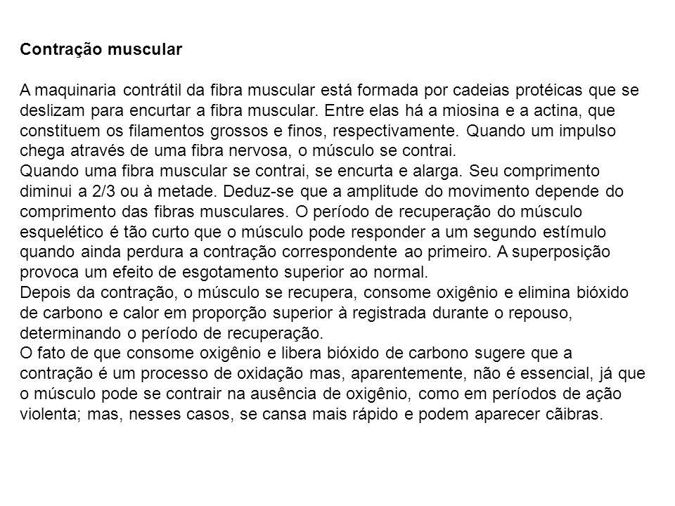 Contração muscular A maquinaria contrátil da fibra muscular está formada por cadeias protéicas que se deslizam para encurtar a fibra muscular. Entre e