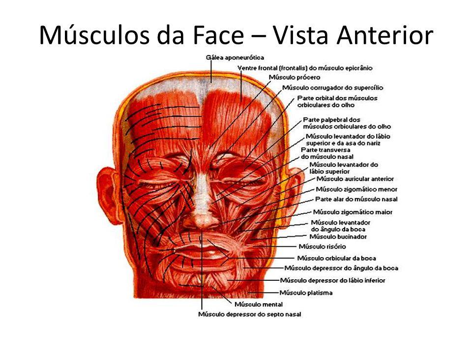 Músculos da Face – Vista Anterior