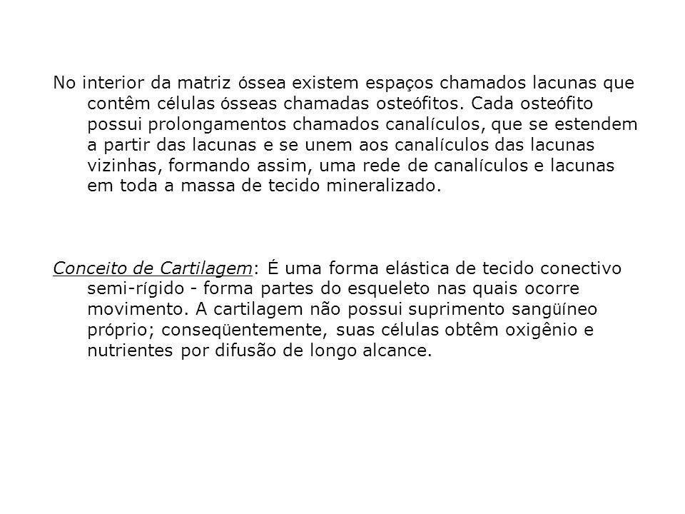 No interior da matriz ó ssea existem espa ç os chamados lacunas que contêm c é lulas ó sseas chamadas oste ó fitos. Cada oste ó fito possui prolongame