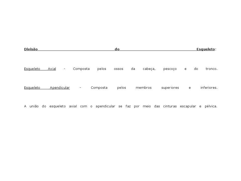 Cintura Pélvica e Membros Inferiores