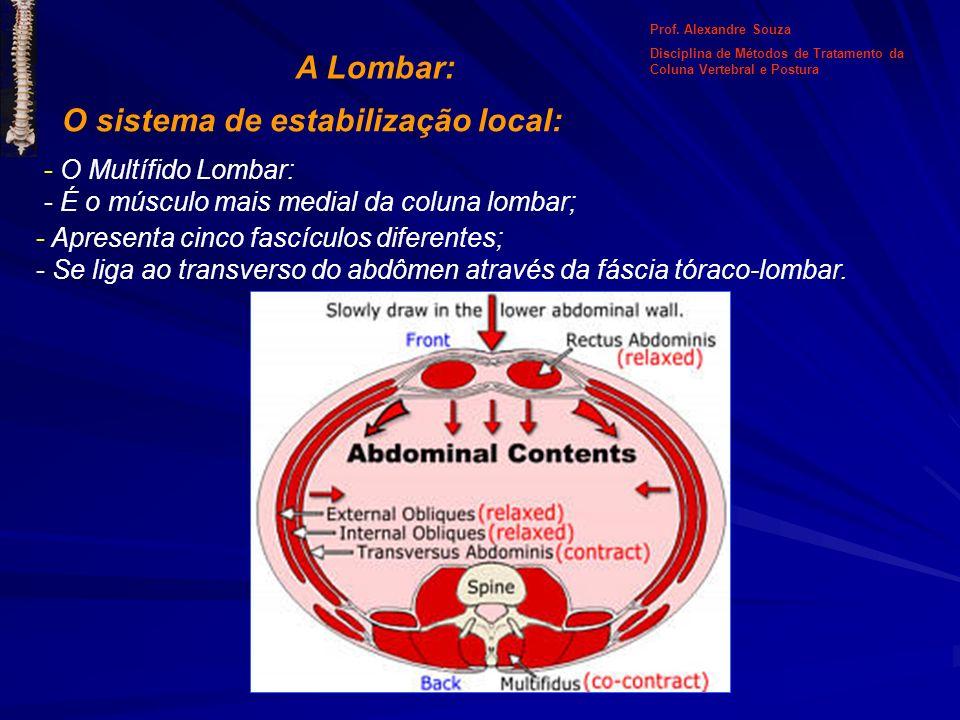 A Lombar: O sistema de estabilização local: - O Multífido Lombar: - É o músculo mais medial da coluna lombar; - Apresenta cinco fascículos diferentes;
