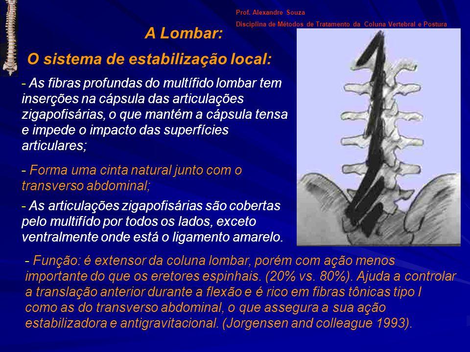 A Lombar: O sistema de estabilização local: - As fibras profundas do multífido lombar tem inserções na cápsula das articulações zigapofisárias, o que