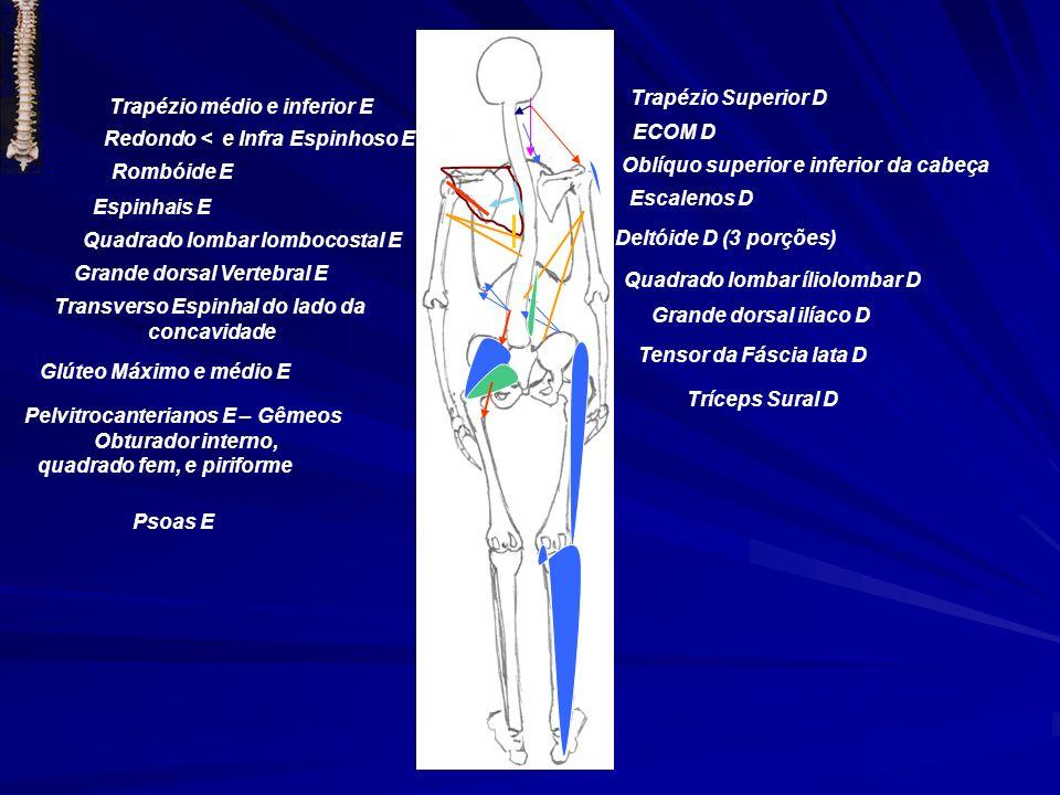 Trapézio Superior D ECOM D Oblíquo superior e inferior da cabeça Escalenos D Trapézio médio e inferior E Redondo < e Infra Espinhoso E Rombóide E Espi