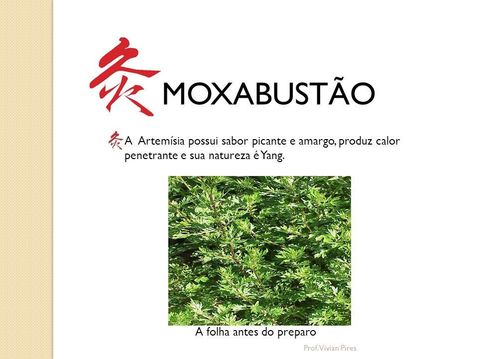 MOXABUSTÃO A Artemísia possui sabor picante e amargo, produz calor penetrante e sua natureza é Yang. A folha antes do preparo Prof. Vivian Pires
