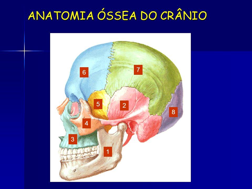 ANATOMIA ÓSSEA DO CRÂNIO 1 2 3 4 5 6 7 8