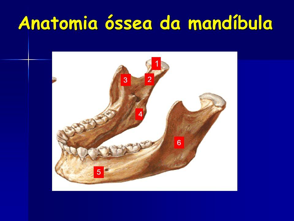 Anatomia óssea da mandíbula 1 2 3 4 5 6
