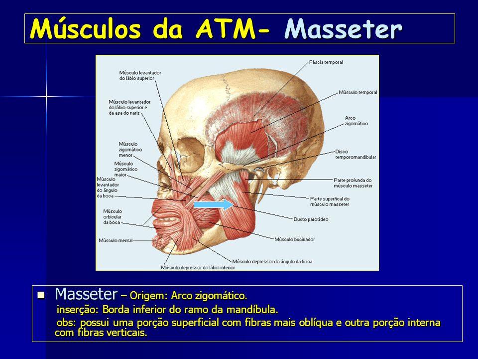 Músculos da ATM- Masseter Masseter – Origem: Arco zigomático.