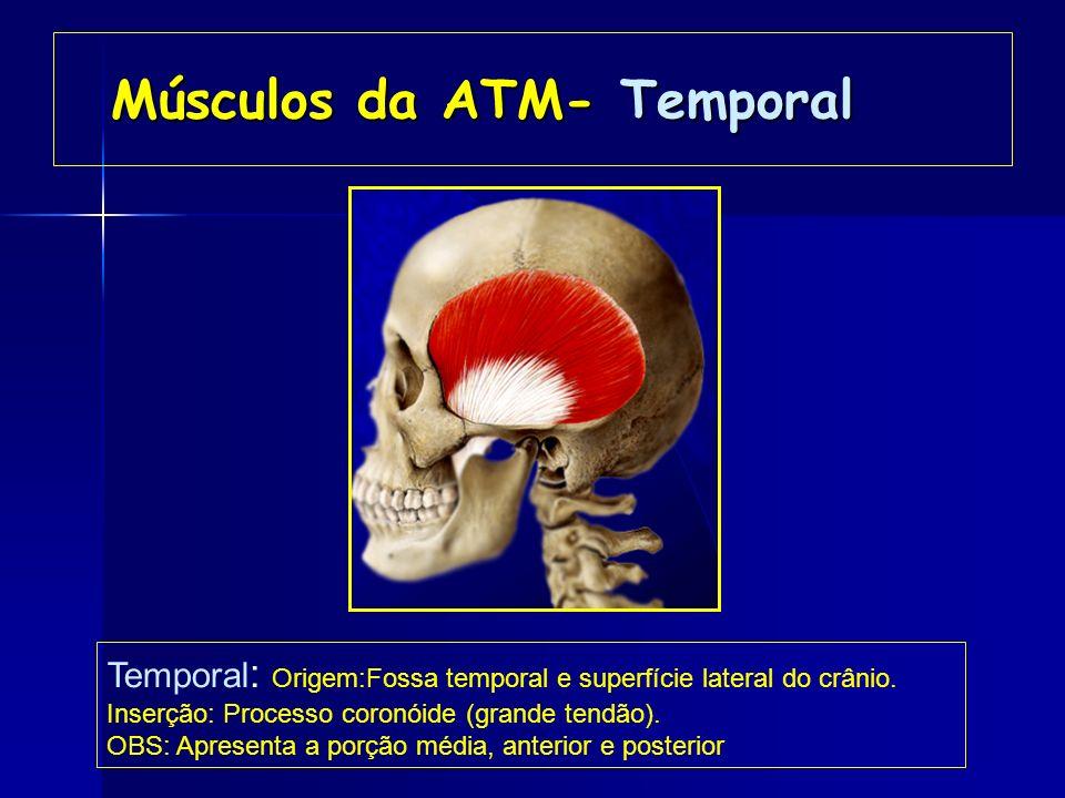 Músculos da ATM- Masseter Masseter – Origem: Arco zigomático. Masseter – Origem: Arco zigomático. inserção: Borda inferior do ramo da mandíbula. inser