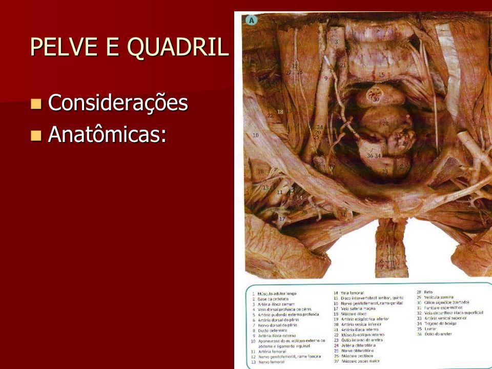 PELVE E QUADRIL Considerações Considerações Anatômicas: Anatômicas: