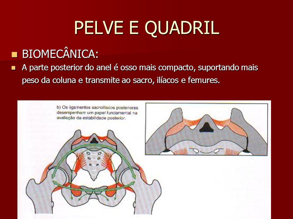 PELVE E QUADRIL BIOMECÂNICA: BIOMECÂNICA: A parte posterior do anel é osso mais compacto, suportando mais peso da coluna e transmite ao sacro, ilíacos