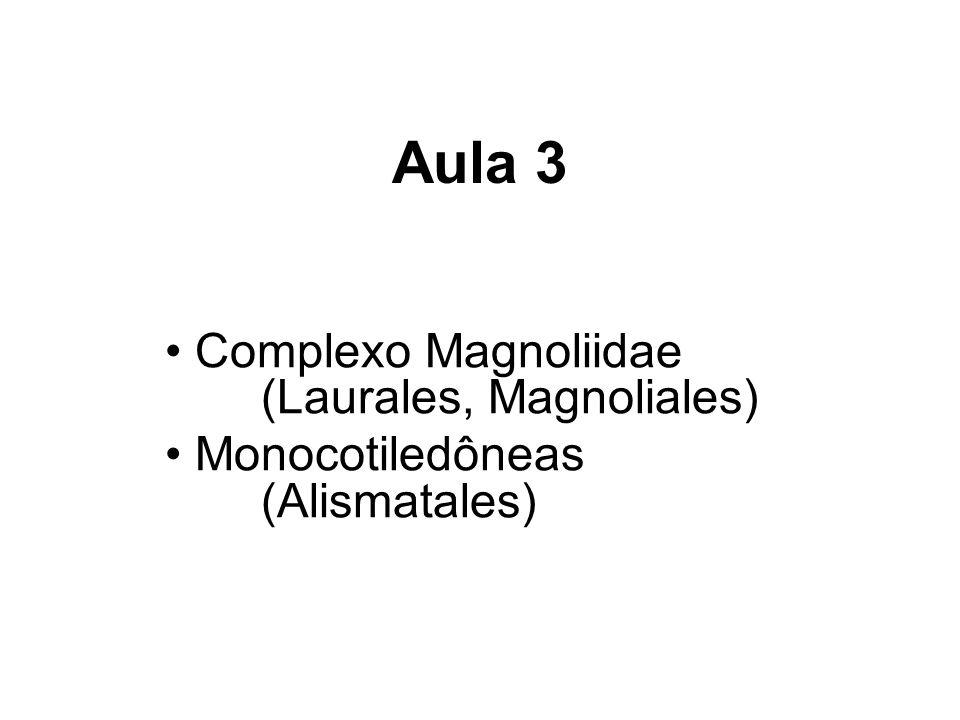 Monocotiledôneas Cerca de 52.000 espécies Representam 22 % do total das angiospermas Grupo monofilético (inserido entre as dicotiledôneas) SIMPLESIOMORFIAS: Flores trímeras Pólen monoaperturado SINAPOMORFIAS: Embriões com um cotilédone Folhas com nervação paralela Caules com feixes vasculares dispersos Raízes adventícias