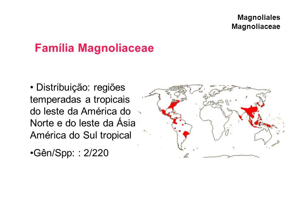 Magnoliales Magnoliaceae Distribuição: regiões temperadas a tropicais do leste da América do Norte e do leste da Ásia. América do Sul tropical Gên/Spp