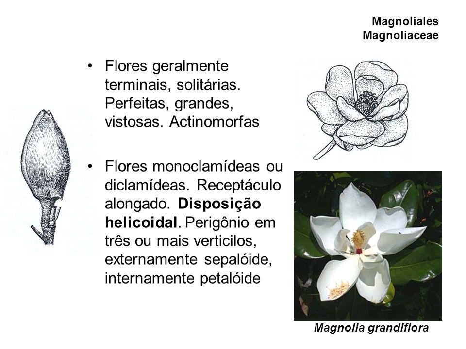 Magnoliales Magnoliaceae Flores geralmente terminais, solitárias. Perfeitas, grandes, vistosas. Actinomorfas Flores monoclamídeas ou diclamídeas. Rece