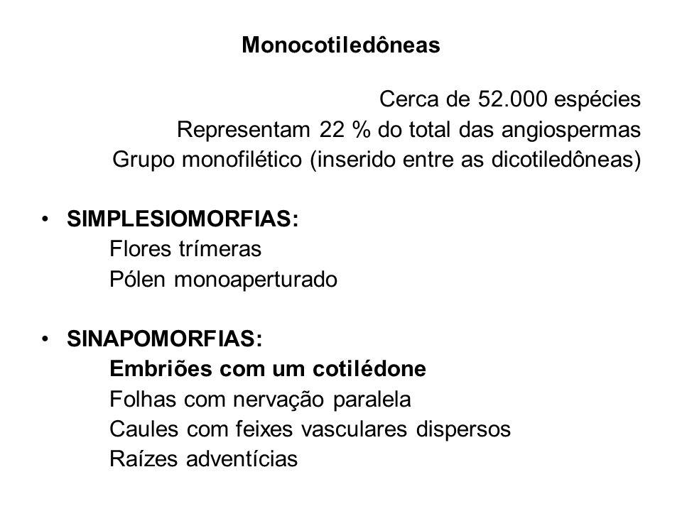 Monocotiledôneas Cerca de 52.000 espécies Representam 22 % do total das angiospermas Grupo monofilético (inserido entre as dicotiledôneas) SIMPLESIOMO