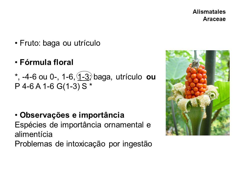 Alismatales Araceae Fruto: baga ou utrículo Fórmula floral *, -4-6 ou 0-, 1-6, 1-3; baga, utrículo ou P 4-6 A 1-6 G(1-3) S * Observações e importância