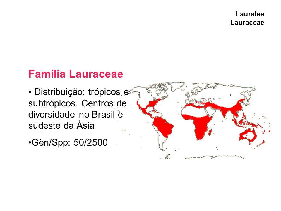 Laurales Lauraceae Família Lauraceae Distribuição: trópicos e subtrópicos. Centros de diversidade no Brasil e sudeste da Ásia Gên/Spp: 50/2500