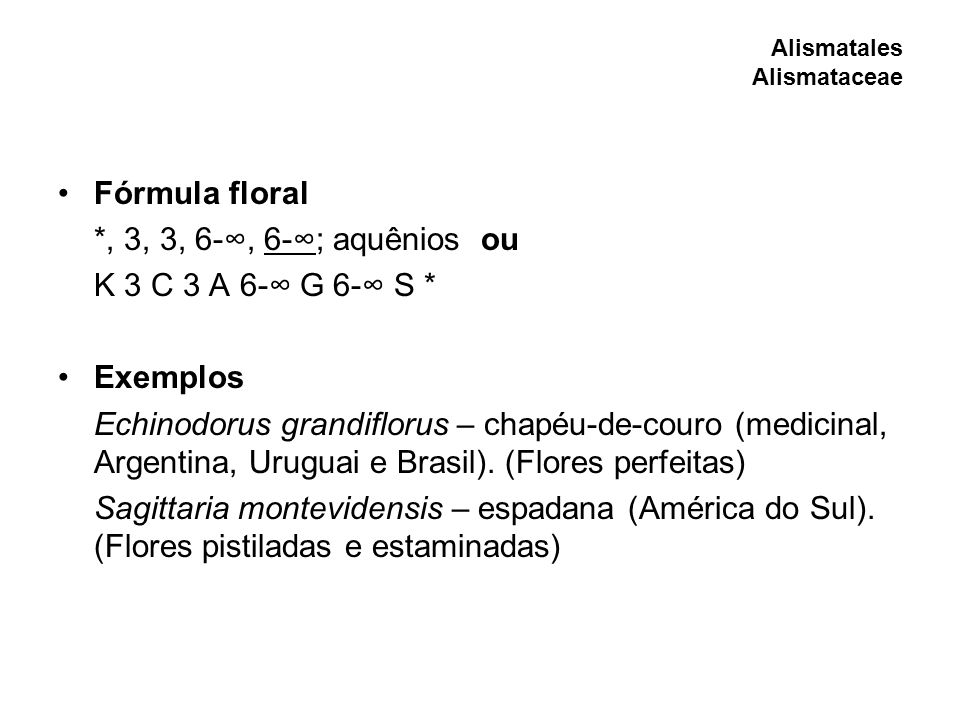 Fórmula floral *, 3, 3, 6-, 6-; aquênios ou K 3 C 3 A 6- G 6- S * Exemplos Echinodorus grandiflorus – chapéu-de-couro (medicinal, Argentina, Uruguai e