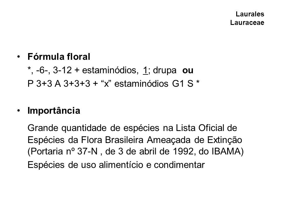 Magnoliales Magnoliaceae Fórmula floral *, -6--,, ; folículo ou P 6- A G S * Observações e importância Espécies de importância ornamental Magnolia ovata - presente na lista preliminar das espécies ameaçadas da flora do RS (em perigo)