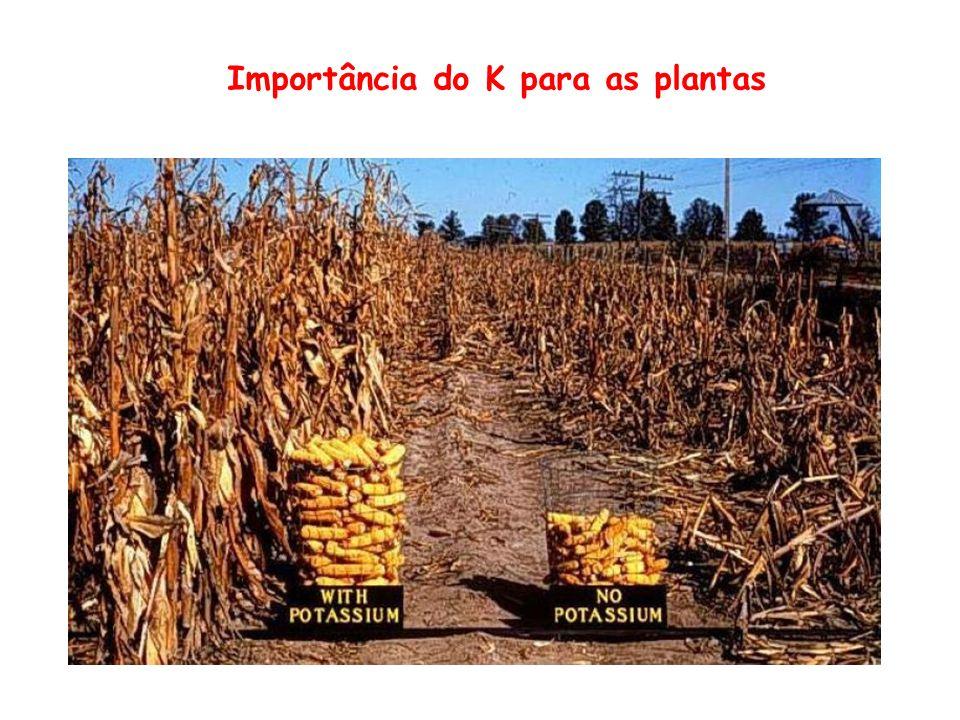 Deficiência de K nas plantas