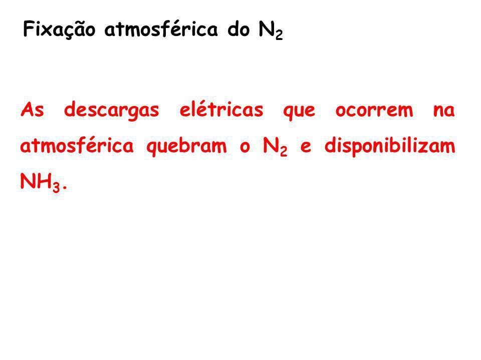 Fixação atmosférica do N 2 As descargas elétricas que ocorrem na atmosférica quebram o N 2 e disponibilizam NH 3.