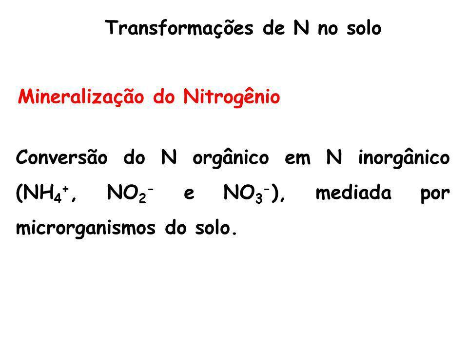 Mineralização do Nitrogênio Conversão do N orgânico em N inorgânico (NH 4 +, NO 2 - e NO 3 - ), mediada por microrganismos do solo. Transformações de