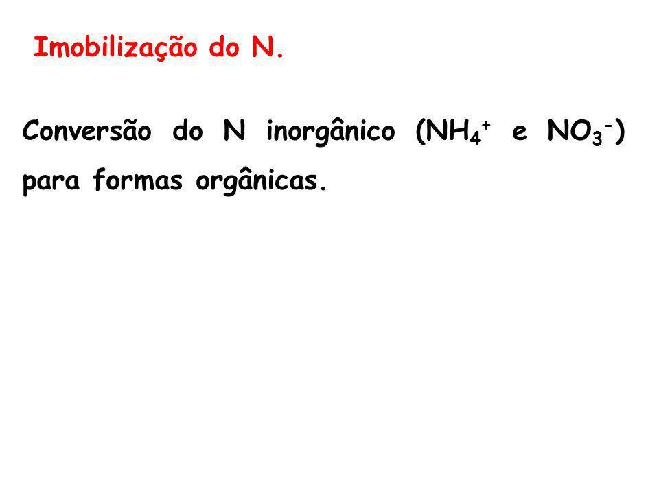 Imobilização do N. Conversão do N inorgânico (NH 4 + e NO 3 - ) para formas orgânicas.